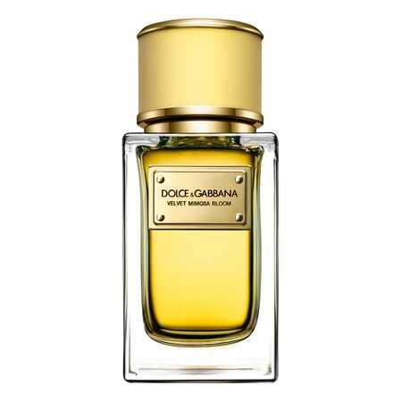 Dolce & Gabbana (D&G) Velvet Mimosa Bloom